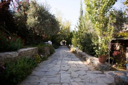 Şirince'de Zeytin Toplama Kampları